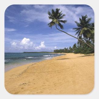 Beach Puerto Rico 2 Square Sticker