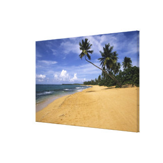 Beach Puerto Rico Gallery Wrapped Canvas