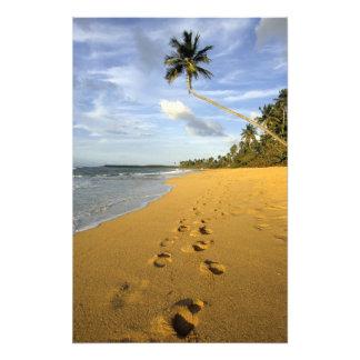 Beach Puerto Rico Photo