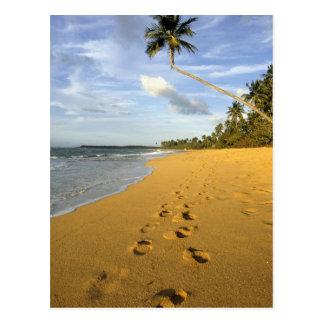 Beach Puerto Rico Postcard