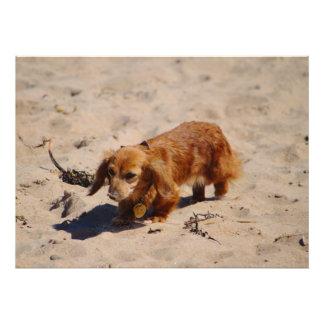 Beach Pup Exploring Photo Art