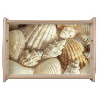 Beach Shells Still Life Serving Tray
