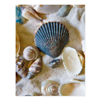 Beach Shells Theme #1 Postcard
