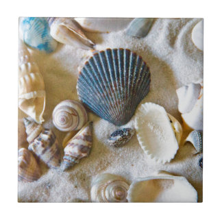 Beach Shells Theme #1 Small Square Tile
