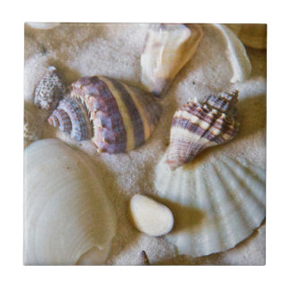 Beach Shells Theme #2 Small Square Tile