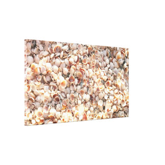 Beach Shells Wrapped Canvas Photo Art