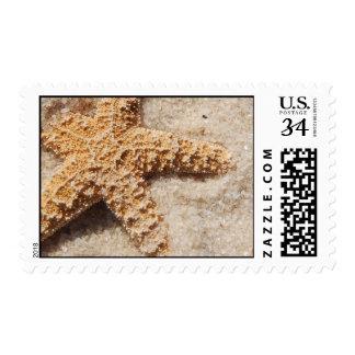 Beach Wedding Postage Stamp:  Starfish in Sand