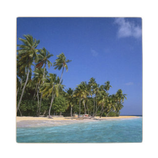 Beach with palm trees, Maldives Wood Coaster