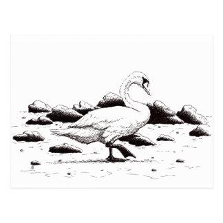 beached swan pen & ink bird drawing postcard