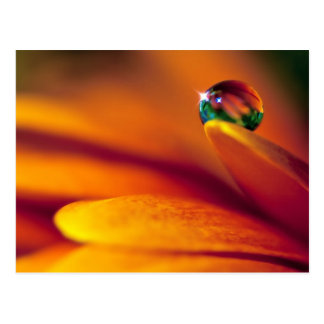 Bead Of Water On A Flower Postcard