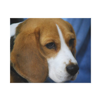 beagle-31.jpg gallery wrap canvas