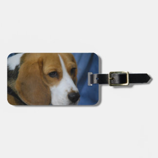 beagle-31.jpg luggage tag