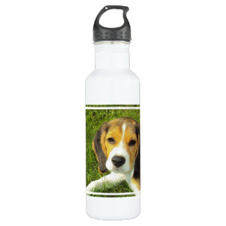 Beagle 710 Ml Water Bottle