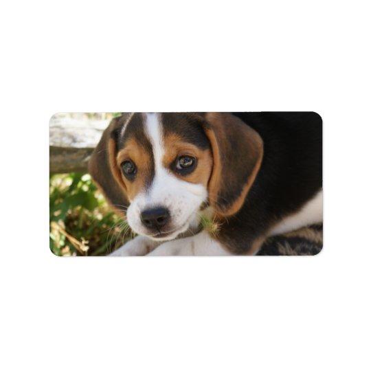 Beagle Baby Dog Label