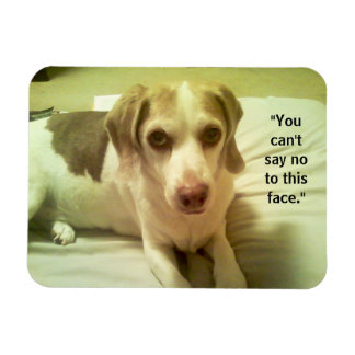 "Beagle ""Can't Say No to This Face"" 3x4 Magnet"