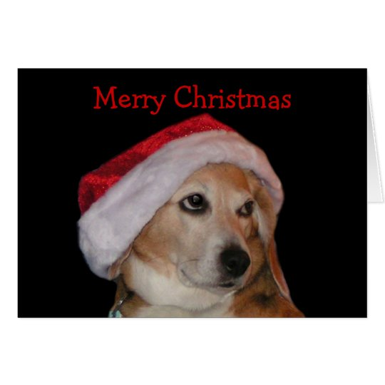 Beagle Christmas Card (Santa)