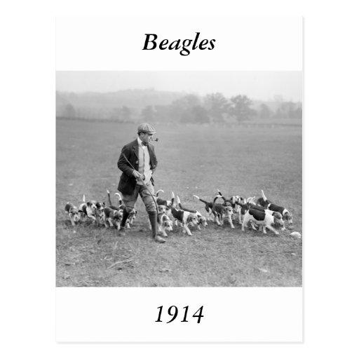 Beagle Club, 1914 Post Cards