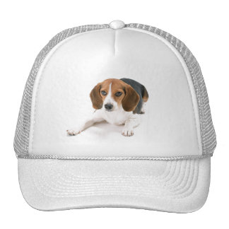 Beagle Dog Baseball Hat