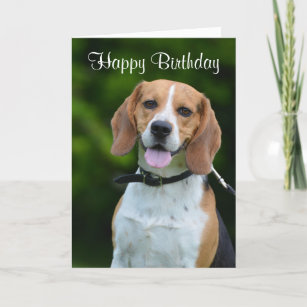 Beagle Dog Lovers Cute Custom Birthday Card