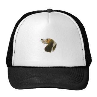 Beagle dog, tony fernandes cap