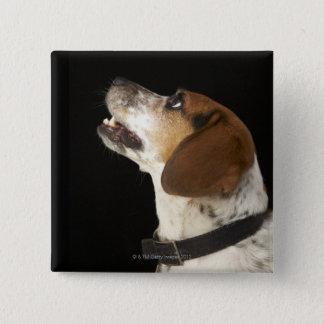 Beagle dog with black collar profile 15 cm square badge