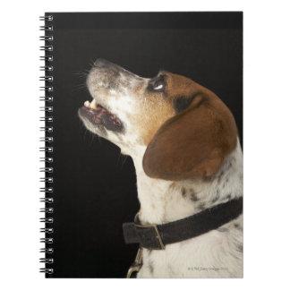 Beagle dog with black collar profile note book