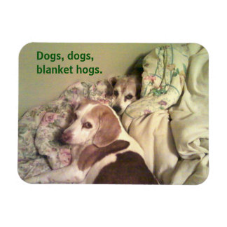 """Beagle """"Dogs, Dogs, Blanket Hogs"""" 3x4 Magnet"""