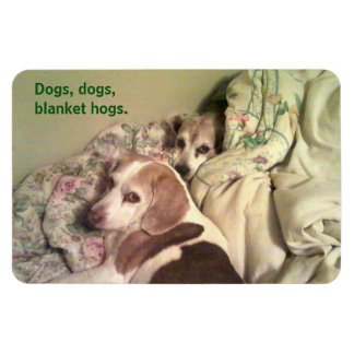 """Beagle """"Dogs, Dogs, Blanket Hogs"""" 4x6 Magnet"""