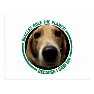 Beagle Dogs rule the Planet - because I said so! Postcard