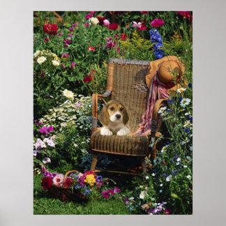 Beagle Garden Poster