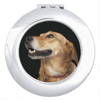 Beagle Golden Lab Mix looking to the side Compact Mirror