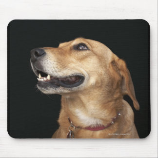 Beagle Golden Lab Mix looking to the side Mouse Mat