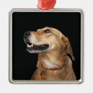 Beagle Golden Lab Mix looking to the side Silver-Colored Square Decoration