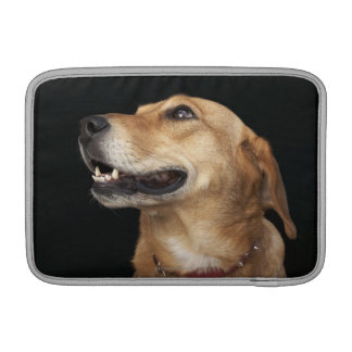 Beagle Golden Lab Mix looking to the side Sleeve For MacBook Air