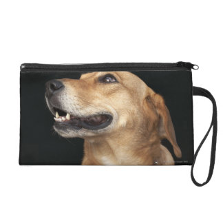 Beagle Golden Lab Mix looking to the side Wristlet