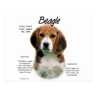 Beagle History Design Postcard