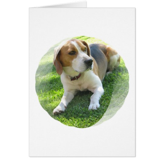 Beagle Hound Dog Greeting Card