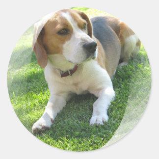Beagle Hound Dog Sticker