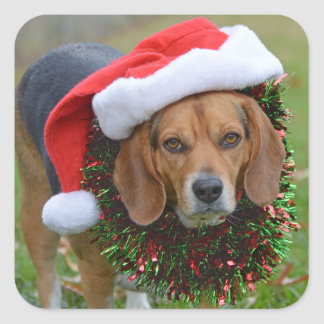 Beagle In Santa Hat & Christmas Garland Square Sticker