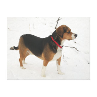 Beagle In The Snow - Wrapped Canvas Cooper Gallery Wrap Canvas