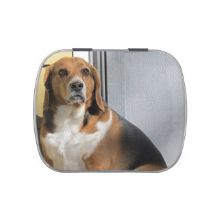 Beagle Jelly Belly Candy Tin