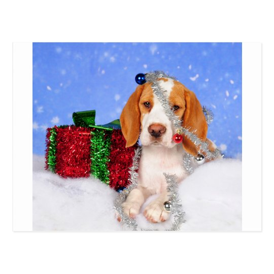 Beagle Jingle Postcard