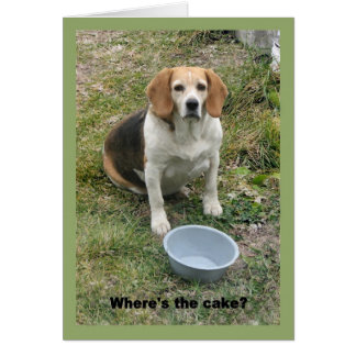 Beagle looking up from her food bowl. greeting card