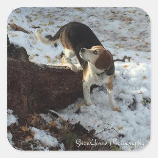 Beagle ~ LuLu Square Sticker