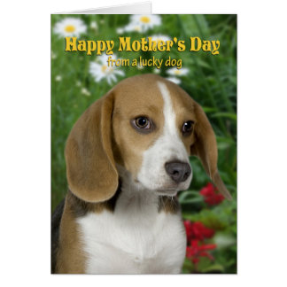 Beagle Mother s Day Card