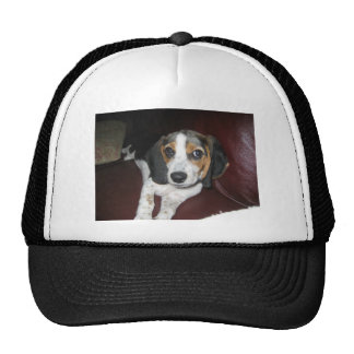Beagle on a Sunday Cap