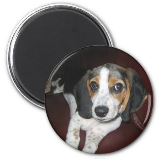 Beagle on a Sunday Magnet