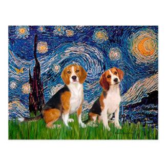 Beagle Pair - Starry Night Postcard