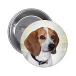 Beagle Perfect Angel gifts Pinback Buttons