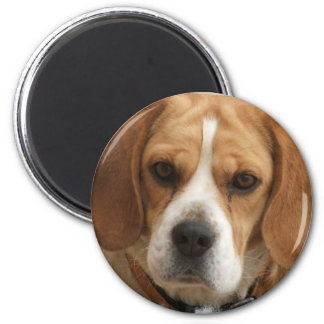 Beagle Pictures Round Magnet